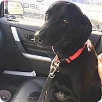 Adopt A Pet :: Aries - Regina, SK