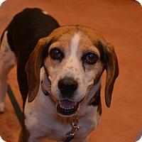 Adopt A Pet :: Mercy - cicero, NY