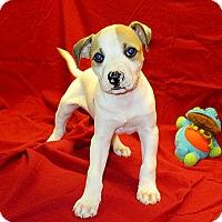Adopt A Pet :: 17-d04-049 Tad - Fayetteville, TN