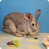 Adopt A Pet :: Dawson - Birmingham, AL