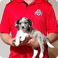 Adopt A Pet :: Libby - South Euclid, OH