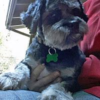 Adopt A Pet :: Obie - Salem, OR