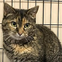 Adopt A Pet :: Amelia - Beckley, WV