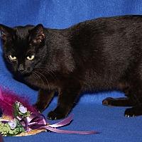 Adopt A Pet :: Mama Mia (Mother w/3 kittens) - Marietta, OH