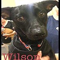 Adopt A Pet :: Wilson - Warren, PA
