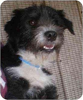 Terrier (Unknown Type, Medium) Mix Dog for adoption in Templeton, California - Dynomite