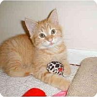 Adopt A Pet :: Emily - Proctor, MN