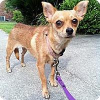 Adopt A Pet :: Luna - Baton Rouge, LA