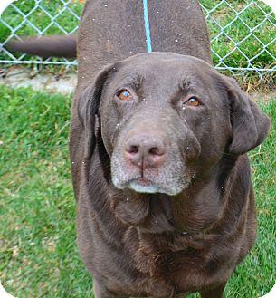 Labrador Retriever Mix Dog for adoption in Fruit Heights, Utah - Ella
