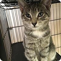 Adopt A Pet :: Crush - East Brunswick, NJ