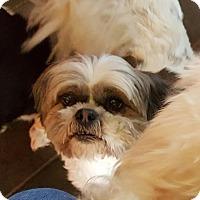Adopt A Pet :: Hercules - Freeport, NY
