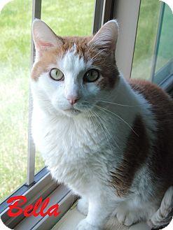Domestic Shorthair Cat for adoption in Brookings, South Dakota - Bella