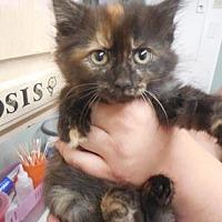 Adopt A Pet :: Cathy - Morgan Hill, CA