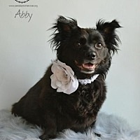 Adopt A Pet :: Abby - Kenner, LA