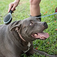 Adopt A Pet :: Turkey - Key Biscayne, FL