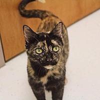 Adopt A Pet :: Lady - Philadelphia, PA