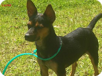 Terrier (Unknown Type, Small) Mix Dog for adoption in Slidell, Louisiana - Lucas