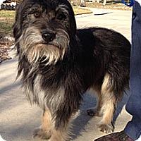 Adopt A Pet :: Homer - San Antonio, TX
