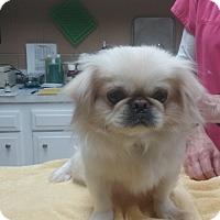 Adopt A Pet :: Evie and Katie - Richmond, VA