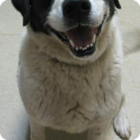 Adopt A Pet :: Mikie - Gary, IN