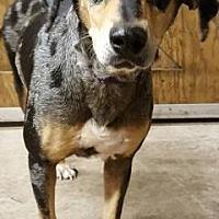 Adopt A Pet :: Ursa - Loxahatchee, FL