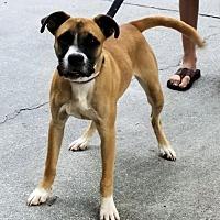 Adopt A Pet :: Charlie - Rock Hill, SC