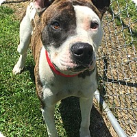 Adopt A Pet :: Buddy - Morehead, KY
