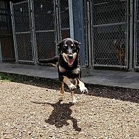 Adopt A Pet :: Sheila - Harmony, Glocester, RI
