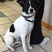 Adopt A Pet :: Scarlette - Chippewa Falls, WI