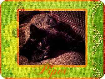 Domestic Longhair Cat for adoption in Hagerstown, Maryland - Piper