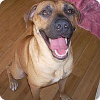 Adopt A Pet :: SIMBA - Hollywood, FL