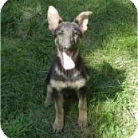 Adopt A Pet :: Mattie ADOPTED!! - Antioch, IL
