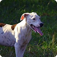 Adopt A Pet :: Tig - Pontotoc, MS