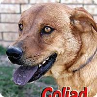 Adopt A Pet :: Goliad - Midland, TX
