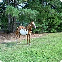 Adopt A Pet :: Jewel - York, SC