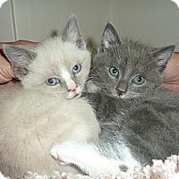 Adopt A Pet :: Pollux - Stanford, CA