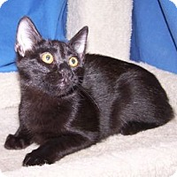 Adopt A Pet :: K-Alice2-Salsa - Colorado Springs, CO