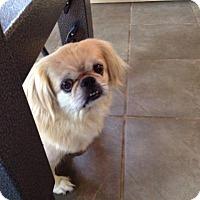Adopt A Pet :: Maya - Freeport, NY