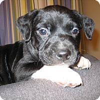 Adopt A Pet :: Donovan - richmond, VA