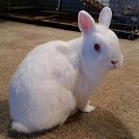 Adopt A Pet :: Luna - St Johns, FL