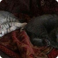 Adopt A Pet :: Moonbeam - Raritan, NJ