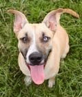 Shepherd (Unknown Type) Dog for adoption in Memphis, Tennessee - Zora