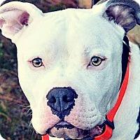 Adopt A Pet :: JC - Charlotte, NC