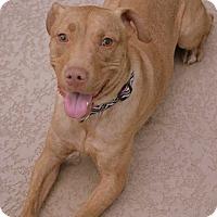 Adopt A Pet :: MOLLY - Higley, AZ