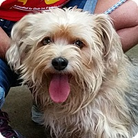 Adopt A Pet :: Chewy - Greeley, CO