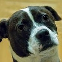 Adopt A Pet :: Doble - Chattanooga, TN