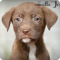 Adopt A Pet :: Halle Joy~adopted! - Glastonbury, CT