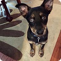 Adopt A Pet :: Elliott - Washington, DC