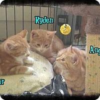 Adopt A Pet :: Ryden - Norwich, NY
