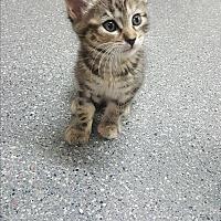 Adopt A Pet :: Cindy - yuba city, CA
